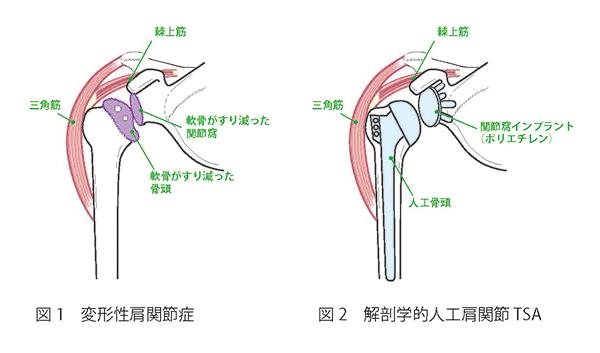 肩関節について 図1,2